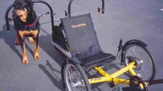 First came the dog-powered scooter, now inventor Mark Schuette has developed a dog-powered recumbent trike that utilizes the the added stability offered by a sit-down 3-wheel design, plus twice the steering power and braking power of the scooter.
