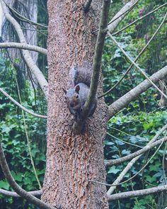 안뇽.. Halloowz Hello! Hey! Hi to you there! How are you? What've you been up to? ... .. . #green #nature #animal #squirrel #inthewild #beauty #아르다움 #自然之美 #groen #natuur #dier #eekhoorn #inhetwild #schoonheid #imblessed #purposeoflife #GRATEFUL #FAITHFUL #PUSH #SwAgape #inCHRIST #GodBless  #nofilter #노필터 #itsalie #maybenot #stiekemkleinbtjedit  #bym3 #3mmaann #EL
