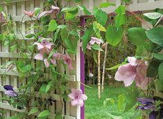 treillage pour palisser plantes grimpantes et isoler un coin de jardin.