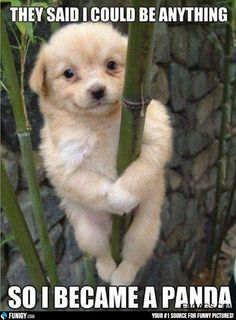 They said I could be anything - so I became a Panda (Funny Animal Pictures) - #bamboo #dog #panda #puppy