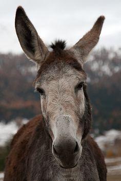 Donkey | von Matteo Moretti
