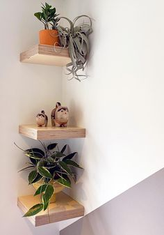 Corner Plant Shelf, Corner Shelves Bedroom, Plant Shelves, Floating Books, Floating Corner Shelves, Plywood Shelves, Torsion Box, Plant Wall, Biodegradable Products