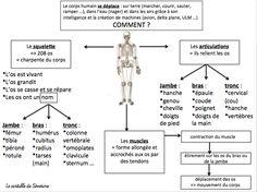 Carte mentale sciences : le corps humain                                                                                                                                                                                 Plus