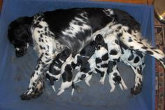Flocka and pups