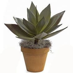 23 inch Natural Touch Agave Plant: Unpotted (Set of Ceramic Planters, Planter Pots, Artificial Plants And Trees, Agave Plant, Agaves, Southwestern Style, Greenery, Succulents, Touch