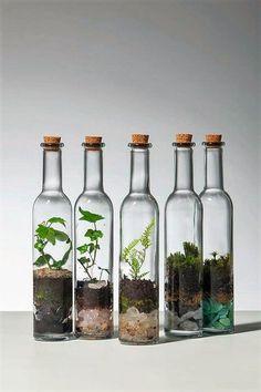 used glass bottles terrarium