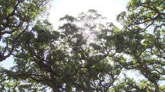 Alcornocales: tradiciones ancestrales y vanguardistas propuestas turísticas Mejor Gif, Clouds, Plants, Outdoor, Life, Red, Natural Playgrounds, Proposals, Agriculture