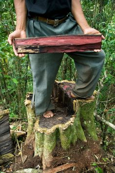 China's rosewood craving cuts deep into Madagascar rainforests