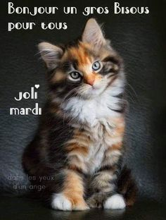 Image Bon Mardi, Emoji, Animals, Younique, Messages, Frases, Happy Tuesday, Gatos, Cats And Kittens