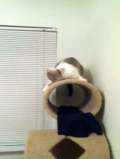 THIS CAT WHO JUST CAN'T . HE'S DONE. HE'S COOKED. HE'S OVER IT. HE CANNOT .   22 Cats That Cannot Even Handle It Right Now