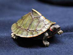 Wee Painted Turtle Beauty In Nature Turtle Tortoises
