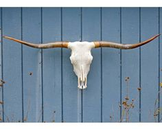 As much as I hate taxidermy, it would be kind of nice to have something to remind us of Texas...