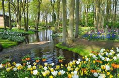 Keukenhof, na Holanda, Lisse - E todas suas flores