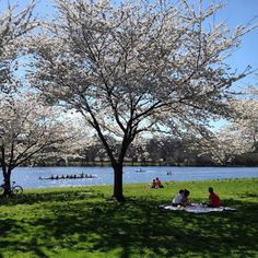 Schuylkill River, Philadelphia, Pennsylvania — by Very Hungry Traveller. Bikers, picnickers, and boaters all enjoying the sunshine and cherry blossoms along the Schuylkill River bank in...