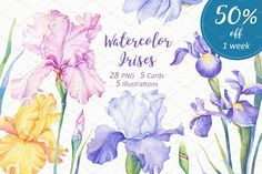 [50% OFF] Watercolor Irises by Sunny Illustrations on @creativemarket