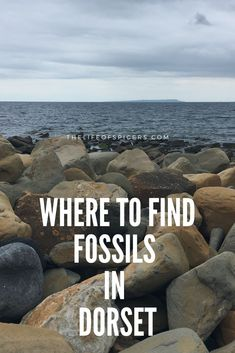 Dorset is very popular place to hunt for fossils. If you're looking to go fossil hunting in Dorset here's what you need to know Days Out For Couples, Family Days Out, Uk Beaches, Sandy Beaches, Lulworth Cove, Dorset Coast, Fossil Hunting, Jurassic Coast