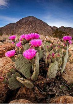Cactus the magical plant