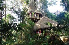 la maison du banian