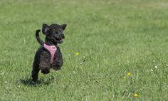 My dog Poppy by Nigel Lomas on 500px