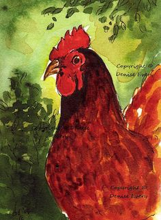Rhode Island Red Hen Chicken Bird Art ACEO Print by DeniseEvery