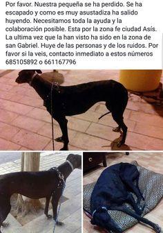 Vamos a ayudar entre todos a nuestos amigos Jose Miguel y Paula. Necesitamos máxina difusión por favor!!!!