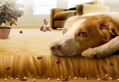 L'astuce pour se débarrasser des puces à la maison noté 3.5 - 4 votes À cause de votre chien ou votre chat, les puces ont envahi votre maison et vous n'arrivez pas à vous en débarrasser? Essayez ceci! Il vous faut: – du citron – du vinaigre blanc – des feuilles de menthe – des clous …