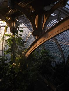 Inside view of the Palm House at Kew, finished in 1848 under the direction of Richard Turner