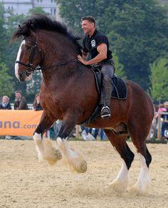 3638 best big horses images in 2019 beautiful horses pretty rh pinterest com