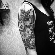 Cat ✌️