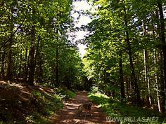 #Iserlohn #Stadtwald #Hund #Schäferhund #Leine #Safetyfirst #Sauerland