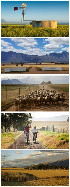 Experience an authentic farm stay in the Riebeek Valley, just about an hour and a half from Cape Town! Farm Stay, Farms Living, Come And See, Farm Life, Cape Town, Country Living, Landscape Photography, South Africa, Nest