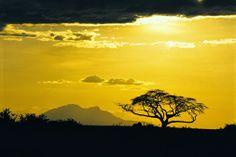 Safari Rejser med Bravo Tours. Se mere på www.bravotours.dk @Bravo Tours #BravoTours #Travel