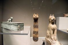 "Si alza il sipario su ""Egitto. Splendore millenario"", in mostra a Bologna (fotoservizio Mario Carlini/ Iguana press) Mummies of cats"