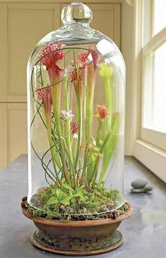 beautiful terrarium images to pin | ... beautiful terrarium: http://www.midwestliving.com/garden/container