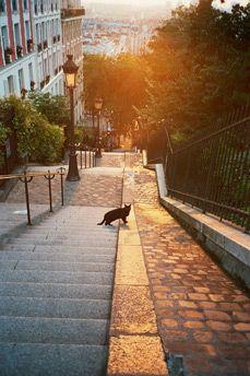 Black cat in Montmartre