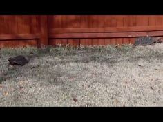 Day After Christmas with the Redfoots After Christmas, Christmas 2015, News Tips, Tortoises, New Tricks, Dallas, Youtube, Turtles, Tortoise