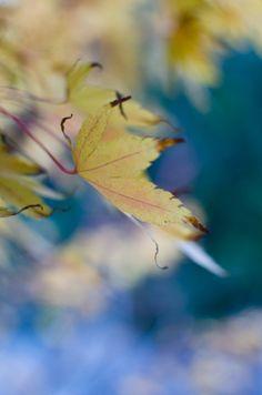 Leaves | At Down Under - Viviane Perenyi