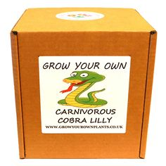 Grow Your Own Carnivorous Cobra Lily Plant Kit - Planting kit for children and adults Small Shrubs, Small Trees, Lily Plant, Coffea Arabica, Garden Gifts, Grow Your Own, Planting, Kit, Children