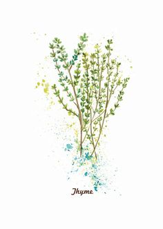 Thyme original watercolor painting. by ThePaperWing