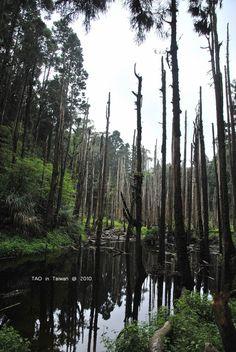 [南投] 忘憂森林