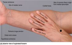 Image result for wrist anatomy