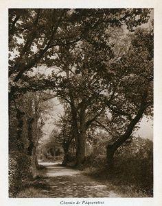 Chemin de Pâquerettes Hui, Country Roads, Tray