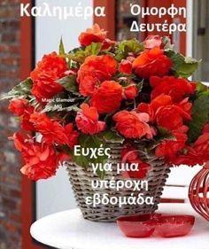 Good Morning, Table Decorations, Plants, Furniture, Home Decor, Buen Dia, Decoration Home, Bonjour, Room Decor