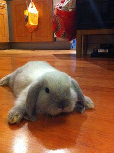hadnt learnt to walk on Wooden floor yet! - Imgur