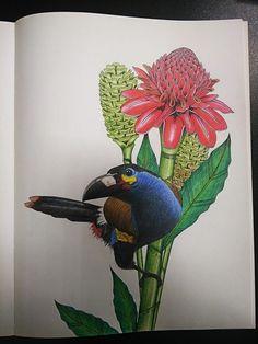 #Daisyfletcher #Birdtopia Daisy, Bird, Painting, Daisy Flowers, Birds, Paintings, Daisies, Draw, Bellis Perennis