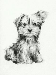 Facts On The Affectionate Yorkie Dog Temperament Animal Sketches, Animal Drawings, Pencil Drawings, Art Sketches, Art Drawings, Puppy Drawing, Desenho Tattoo, Dog Paintings, Dog Portraits