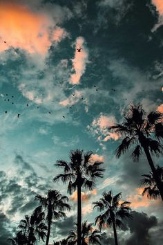 beach, palms, sunset, wallpaper, water