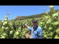 Wijnbuisvrienden 6 - De Wijnridders van de Bourgogne - YouTube