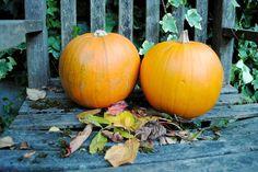 Food And Drink, Home And Garden, Pumpkin, Autumn, Vegetables, Cake, Pumpkins, Fall, Veggies