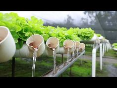 Are you thinking of starting your own hydroponics garden? When it comes to DIY hydroponics, you can